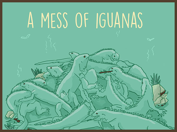 A mess of Iguanas illustration