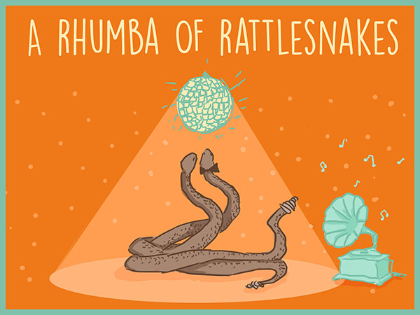 a rhumba of rattlesnakes illustration