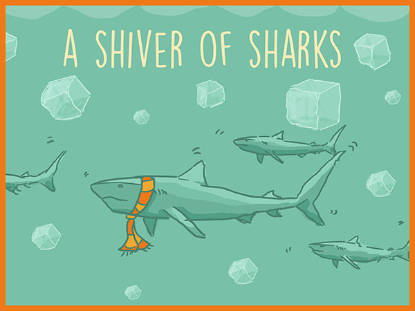 a shiver of sharks illustration